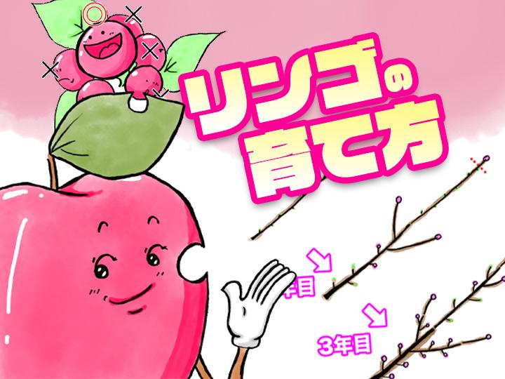 農家が教えるリンゴの育て方 剪定・摘果のコツ&タイミングも解説