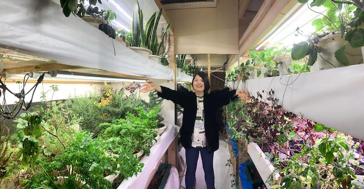 室内の押し入れ農園ですくすく育つ野菜