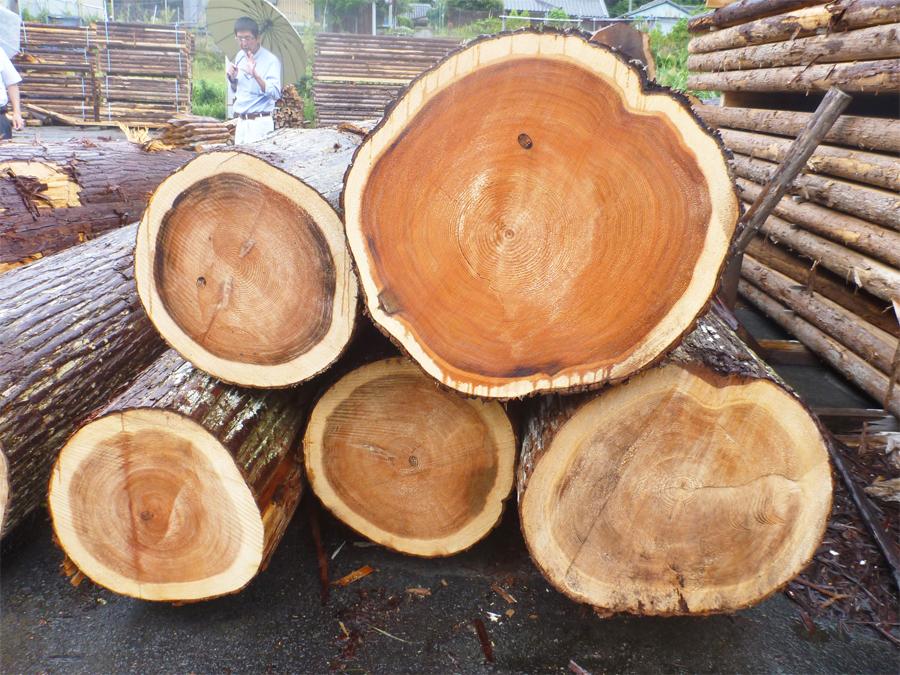 和歌山県農林水産部森林・林業局