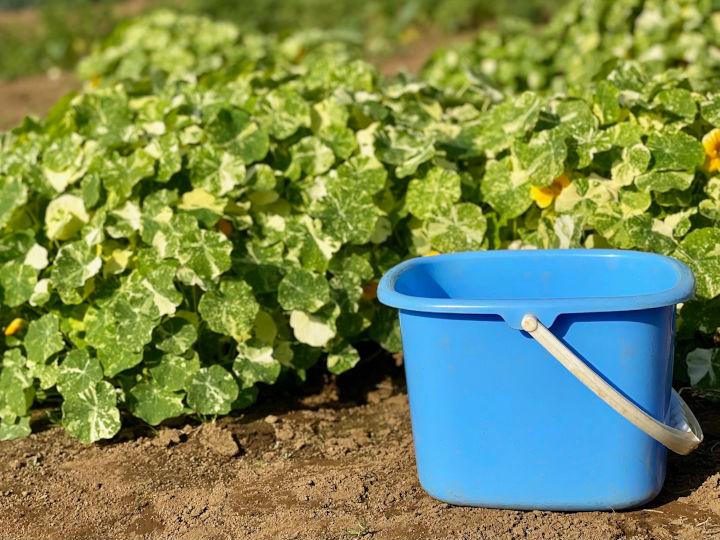収穫の作業効率を最大化! 品質を落とさないタケイファームの7つ道具を紹介