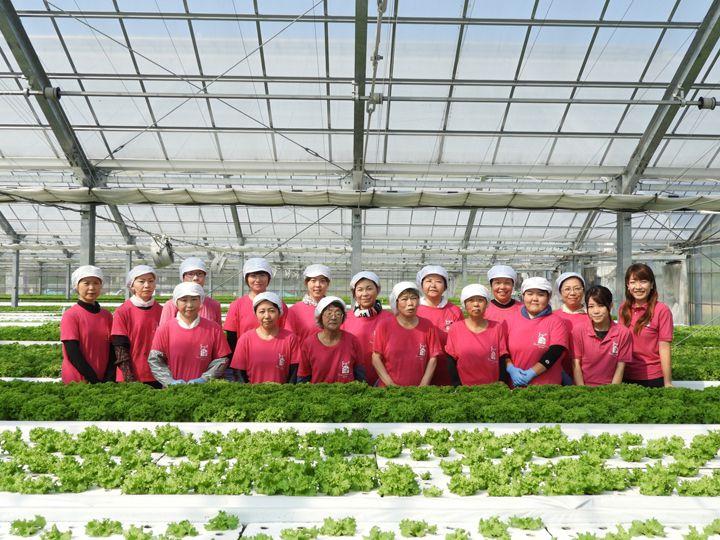 【応募締切3/31まで!】水耕栽培でプロ農家に。女性や若手でも農業経営を目指せる。仕事の選択肢の一つとしての「農業」のあり方