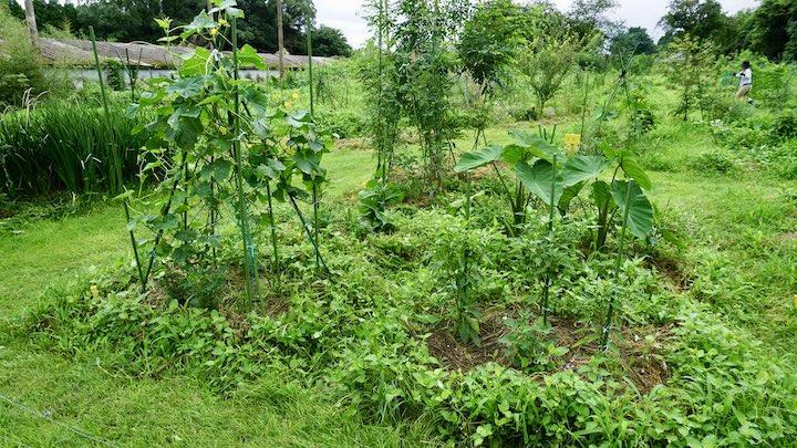 雑草と野菜が共生する条件