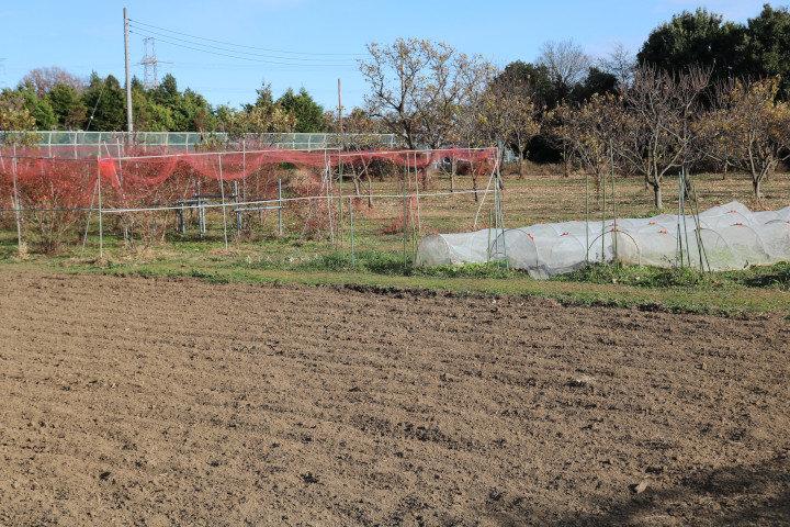 ファーム&ガーデン白岡の畑