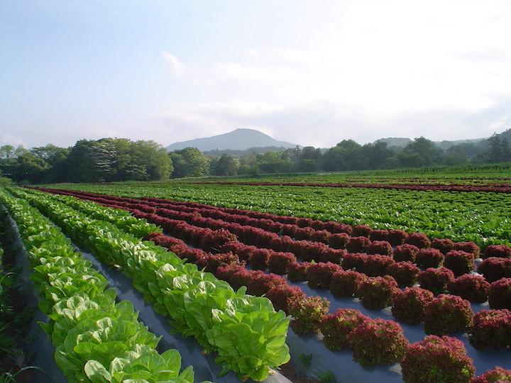 倉渕農場(ワタミ)