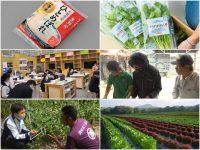 有名企業の農業参入例6選 こんな企業が農業やってるのはナゼ?