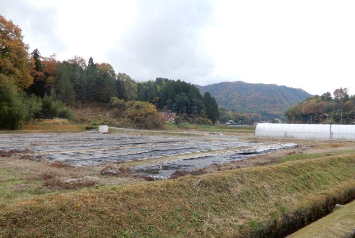 ファームサポート広島中央が作業受託している中山間地