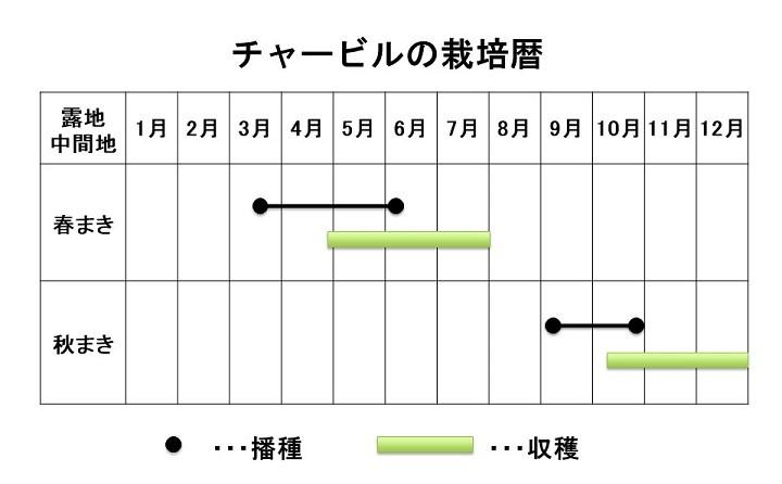 チャービルの栽培暦