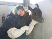 哺乳は愛~酪農経営のもう一つの柱、「子牛」を大切に育てる話~