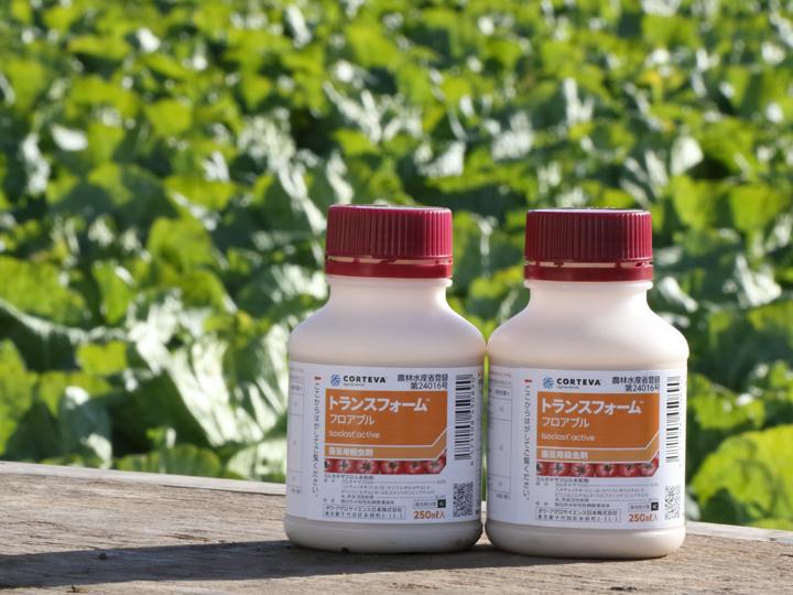 白菜の結球初期の防除に! アブラムシをしっかり落とす殺虫剤が新登場