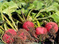 少量多品目農家の悩み、野菜は洗うべきか洗わざるべきか~武井が野菜を洗わない理由~