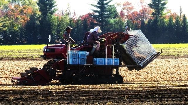 収穫をするトラクター
