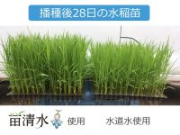 浸種の水を変えると健苗に育つ!? 水稲農家も納得の機能水器『苗清水™』とは