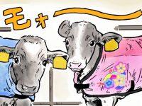酪農漫画「うしだらけの日々」 第18話 冬に見られる子牛の特別な姿