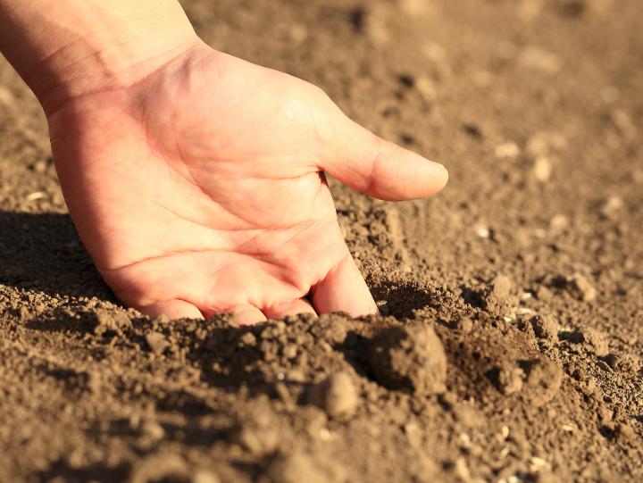 土壌の状態を確かめる手