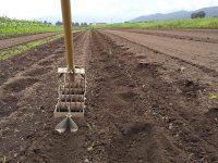 """""""厄介者""""制御の正念場は「種まき前」? 有機農家に学ぶ「雑草管理の哲学」"""