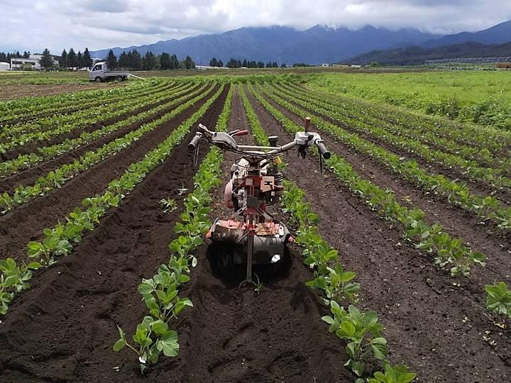 大豆の中耕除草