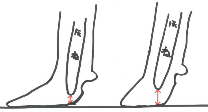 蹄の角度の重要性