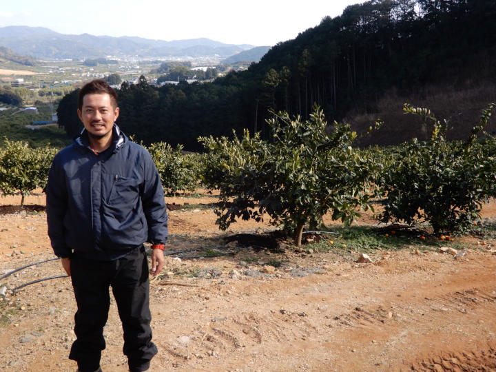 消費が減るミカンを増産できる理由 品種、仕立て方、園地…産地が挑む改革