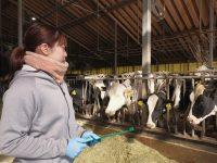 周産期管理は愛~乳牛が健康に過ごすためには、お産前後の管理が重要という話~