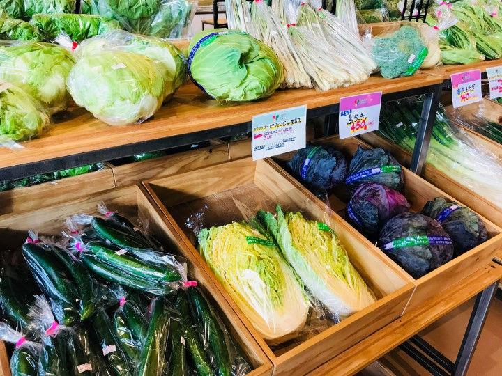 沖縄の農業&流通について冬の野菜2
