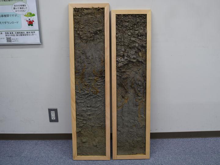 土壌モノリス