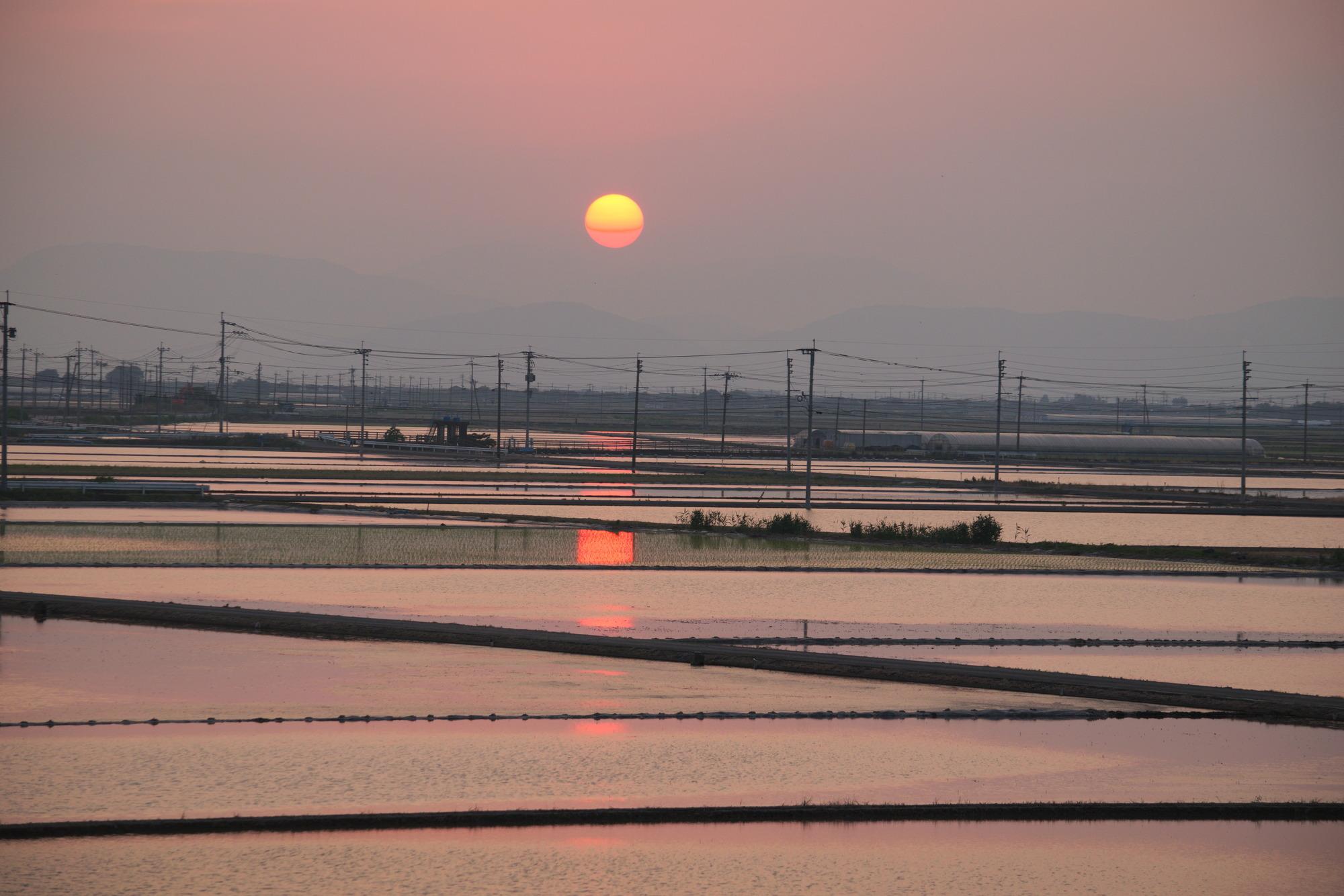夕暮れ時の田
