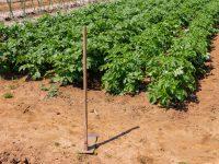 農地売買を個人間でする際の注意点や流れを理解しよう!