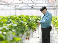人・イチゴ・環境にいいものを。地域貢献、未来につながる農業を実践するいちご農園