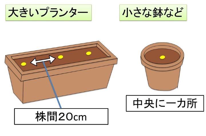 タイムの定植 プランター