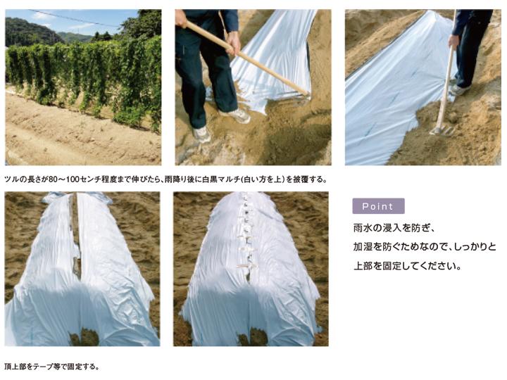 政田自然農園株式会社