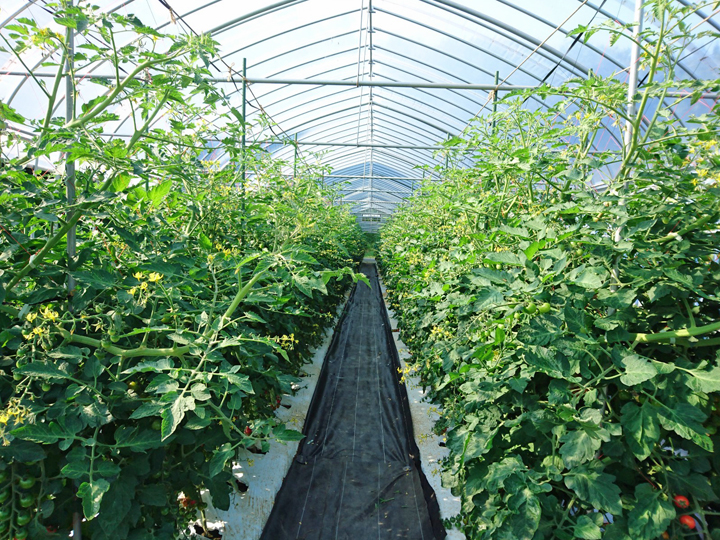先輩就農者や同年代の就農者と積極的にコミュニケーションを取ることで栽培技術や知識も得られます
