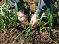 「品質」と「収量」の両立に挑戦! パナソニックの『栽培ナビ』を活用し、科学的で論理的なアプローチを。