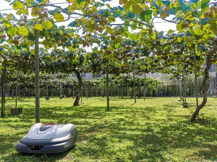 果樹農園でのモニターテストでは「デメリット」は思い当たらないと、大きなメリットを実感