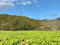 畑のルールは畑の主に聞け! 農家が農場見学をするときの心得