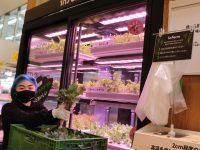 スーパーに突如現れた小さな「畑」 アジア初上陸のInfarmとは