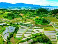 日本のはじまりの地、奈良県明日香村。その風景に欠かせない「稲渕の棚田」を守るサポーターを募集!