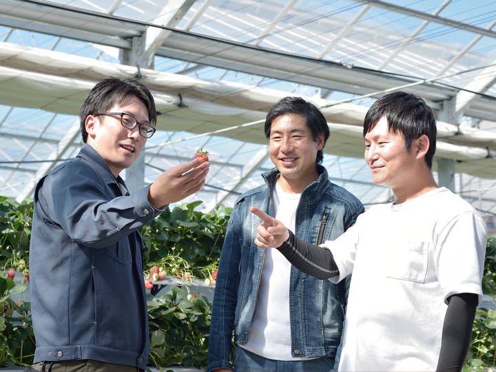 未経験者がイチゴの高設栽培で秀品多収を実現するには。人気イチゴ農園に見る、施設選びのポイント