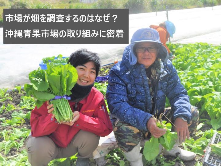 市場が畑を調査するのはなぜ? 沖縄青果市場の取り組みに密着
