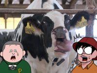 牛の唾液は愛~アシドーシスをコントロールして健康に管理する話~