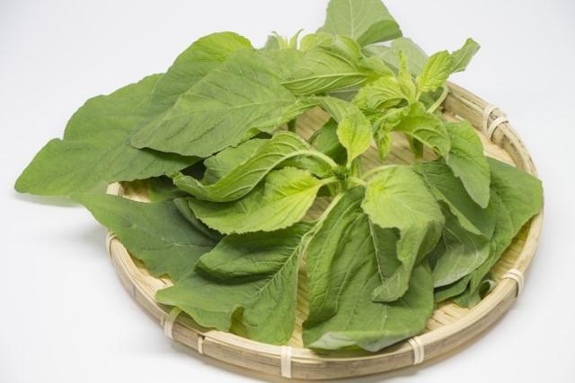 きになるうちなー野菜 アマランサスの葉