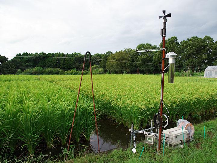 フェーン観測と栽培試験風景