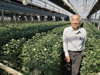 平均年商5000万円をけん引する「渥美半島の伝説」 国内最高級の菊の生産と販売をする集団