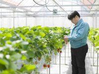 人・いちご・環境にいいものを。地域貢献、未来につながる農業を実践するいちご農園