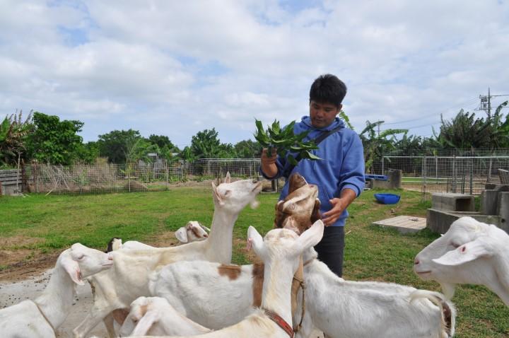 ヤギの飼育とは 牧場のヤギ達