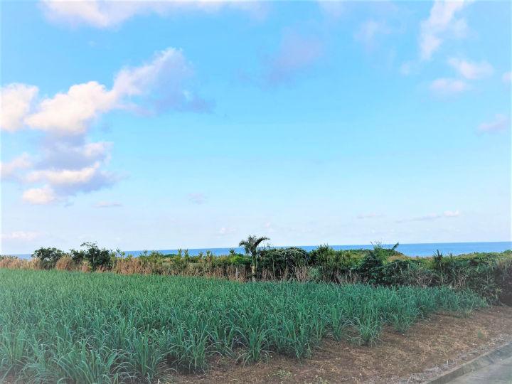 沖縄のヤギ食文化石垣島風景