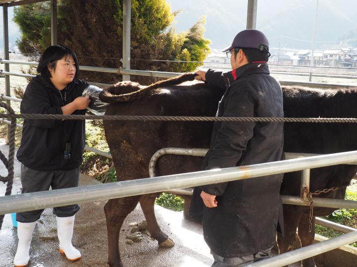 人工授精師に聞いた! 牛飼いを支える仕事と現場のリアル