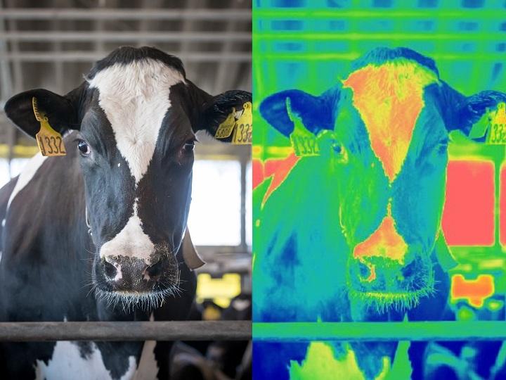 暑熱対策は愛~快適な牛舎で牛を健康に飼う話~