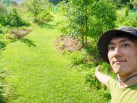 強害雑草を芝生に活用!? ハマスゲ芝生の作り方と注意点【畑は小さな大自然vol.97】