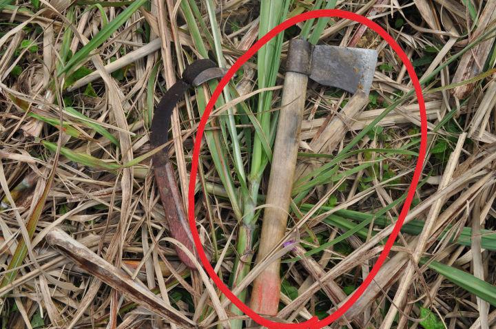 収穫してみた サトウキビ収穫道具1