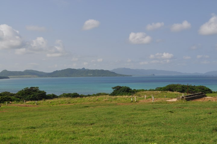 暑い石垣島で放牧を行う牧場風景